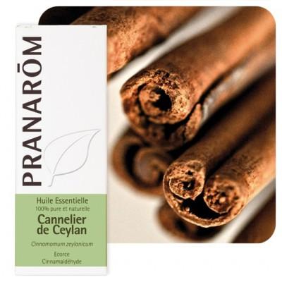 Olejek eteryczny cynamonowy **Cynamonowiec cejloński / Cinnamomum zeylanicum** 5ml*PRANARÔM*