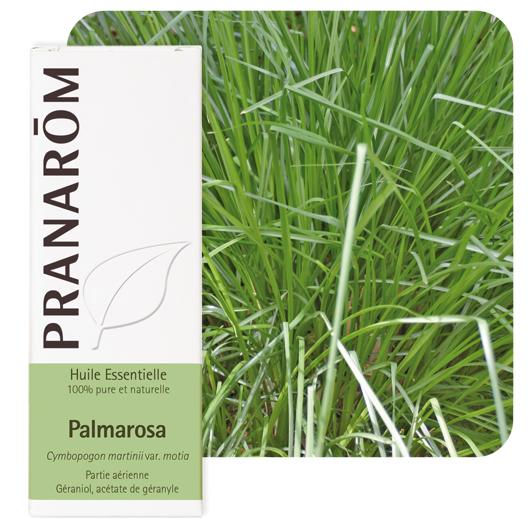 Olejek eteryczny **Palmaroza / Palmarosa / Palczatka imbirowa / Cymbopogon martini var. motial** 10ml*PRANARÔM*BIO