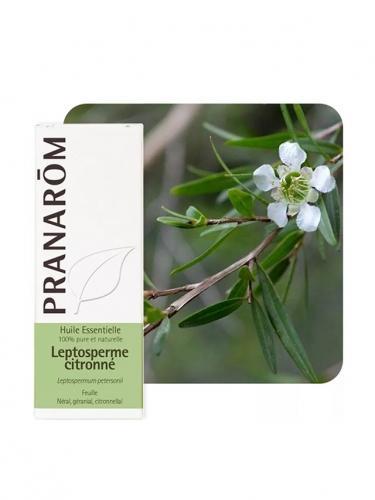 Olejek eteryczny **Drzewo herbaciane cytrynowe / Leptospermum petersonii** 5ml*PRANARÔM*