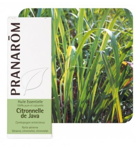 Olejek eteryczny cytronelowy **Citronella Java / Palczatka / Cymbopogon winterianus** 10ml*PRANARÔM*