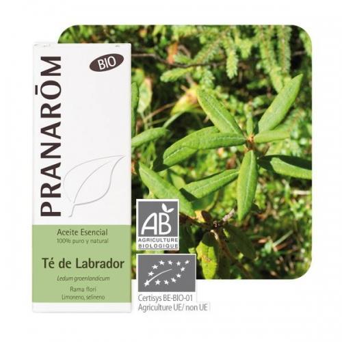 Olejek eteryczny ledum **Bagno grenlandzkie / Ledum groenlandicum** 5ml*PRANARÔM*BIO