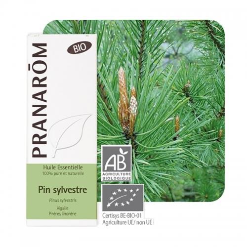 Olejek eteryczny sosnowy **Sosna zwyczajna / Pinus sylvestris** 10ml*PRANARÔM*BIO
